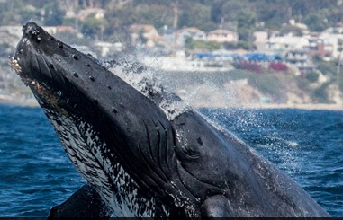 http://omnilore.org/images/whale.jpg